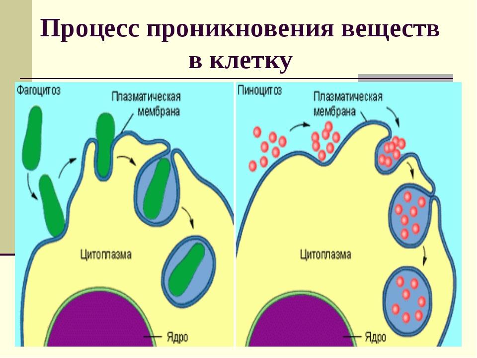 Процесс проникновения веществ в клетку