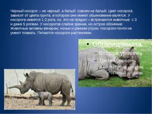 Черный носорог – не черный, а белый совсем не белый. Цвет носорога зависит от