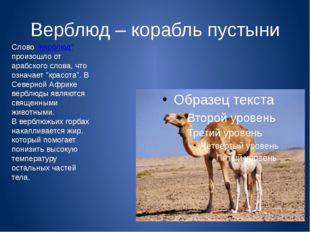 """Верблюд – корабль пустыни Слово """"верблюд"""" произошло от арабского слова, что о"""