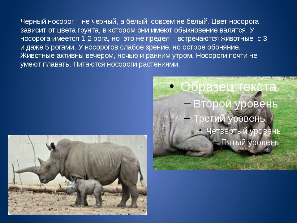 Черный носорог – не черный, а белый совсем не белый. Цвет носорога зависит от...