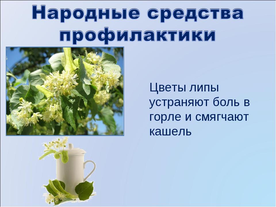 Цветы липы устраняют боль в горле и смягчают кашель