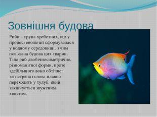 Зовнішня будова Риби – група хребетних, що у процесі еволюції сформувалася у