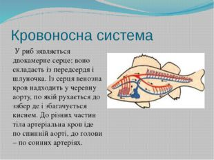 Кровоносна система У риб зявляється двокамерне серце; воно складаєть із перед