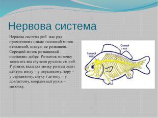Нервова система Нервова система риб має ряд примітивних ознак: головний мозок