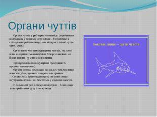 Органи чуттів Органи чуттів у риб пристосовані до сприймання подразнень у вод