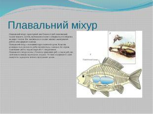 Плавальний міхур Плавальний міхур, характерний для більшості риб, виповнений