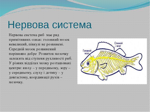 Нервова система Нервова система риб має ряд примітивних ознак: головний мозок...