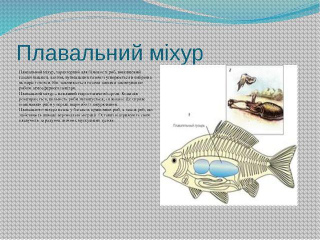 Плавальний міхур Плавальний міхур, характерний для більшості риб, виповнений...