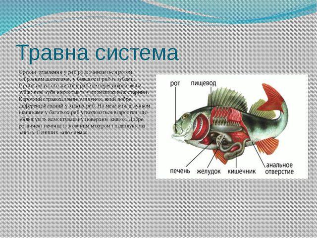 Травна система Органи травлення у риб розпочинаються ротом, озброєним щелепам...