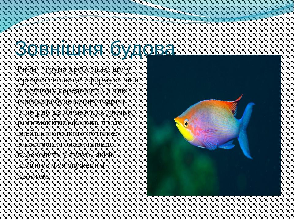 Зовнішня будова Риби – група хребетних, що у процесі еволюції сформувалася у...