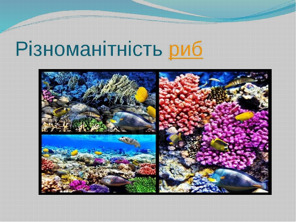Різноманітність риб