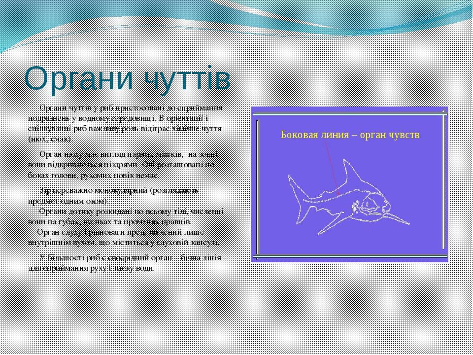 Органи чуттів Органи чуттів у риб пристосовані до сприймання подразнень у вод...