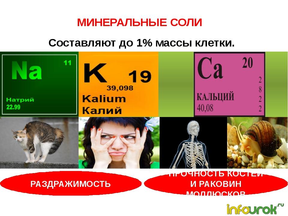 МИНЕРАЛЬНЫЕ СОЛИ Составляют до 1% массы клетки. РАЗДРАЖИМОСТЬ ПРОЧНОСТЬ КОСТ...