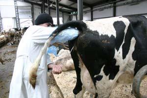 """Тетрадь для проверочных работ по ПМ 05.01 """"Выполнение работ по искусственному осеменению сельскохозяйственных животных и птицы"""""""