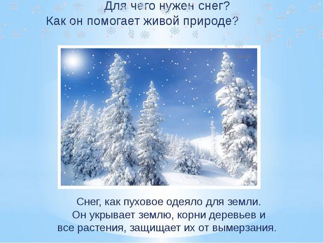 Для чего нужен снег? Как он помогает живой природе? Снег, как пуховое одеяло...