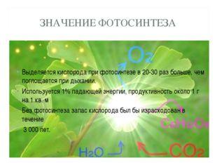 ЗНАЧЕНИЕ ФОТОСИНТЕЗА Выделяется кислорода при фотосинтезе в 20-30 раз больше,