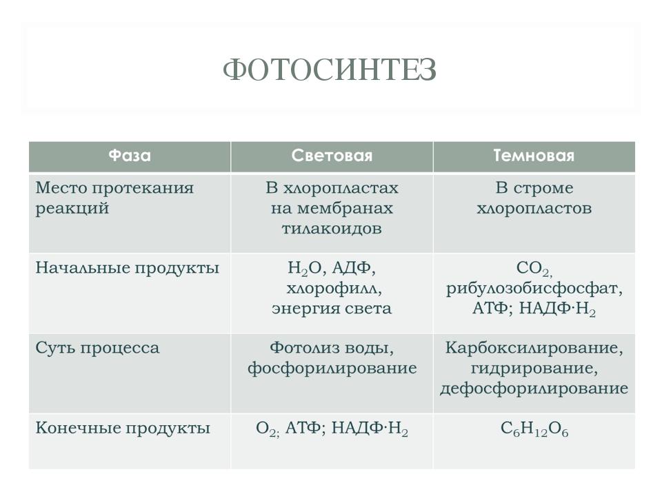 Фотосинтез проверочная работа посадочный
