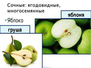Яблоко яблоня груша