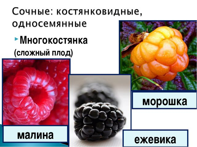 Многокостянка (сложный плод) малина ежевика морошка