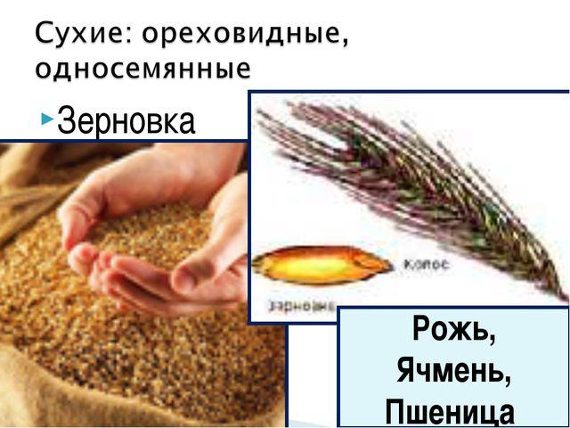 Зерновка Рожь, Ячмень, Пшеница