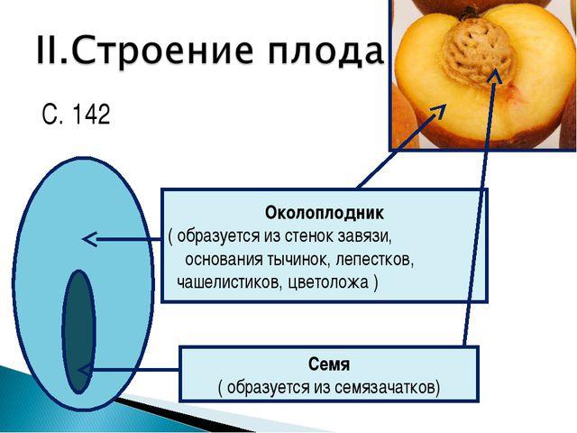 С. 142 Околоплодник ( образуется из стенок завязи, основания тычинок, лепестк...