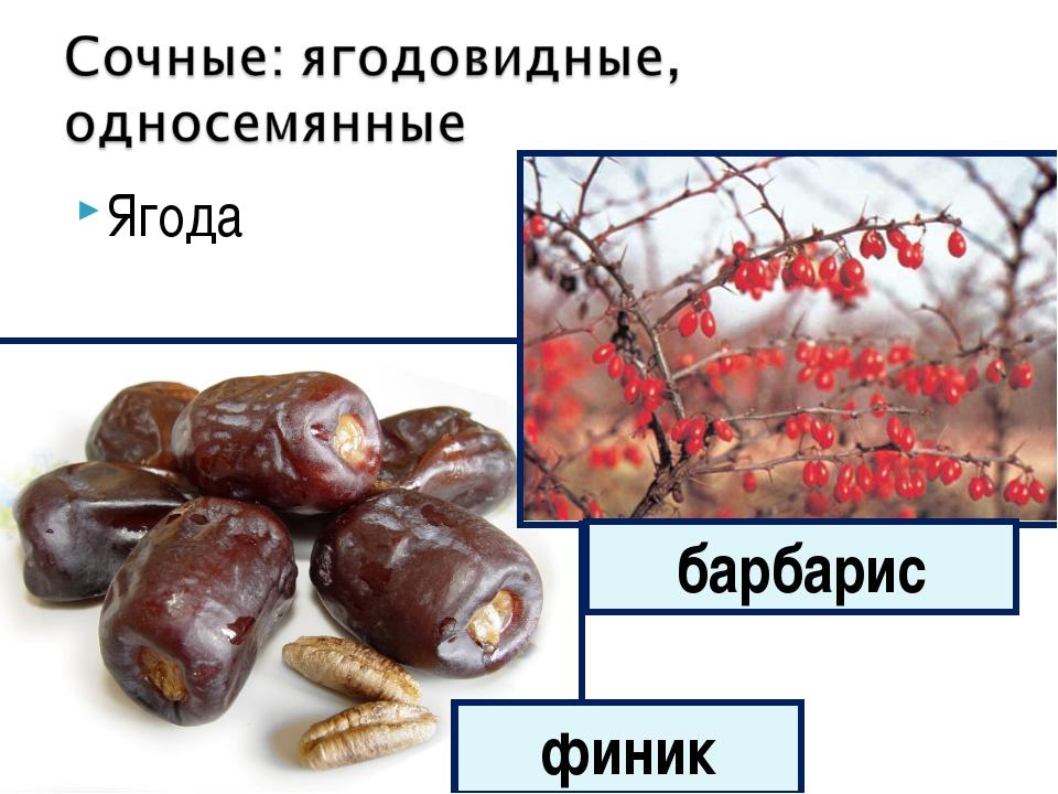Ягода финик барбарис