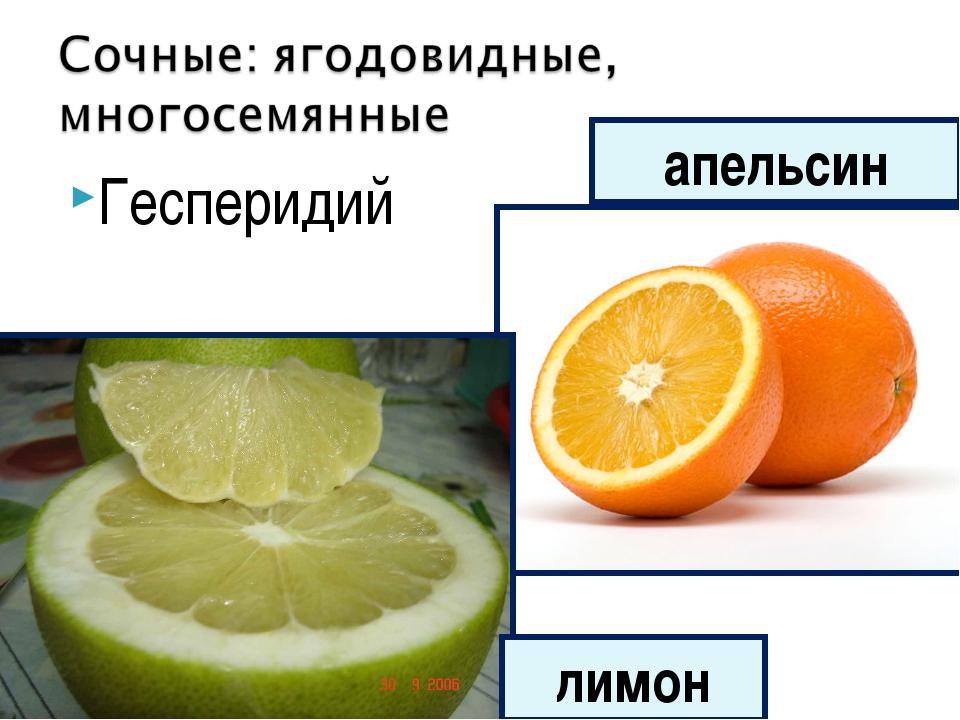 Гесперидий лимон апельсин