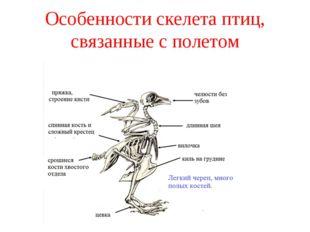 Особенности скелета птиц, связанные с полетом
