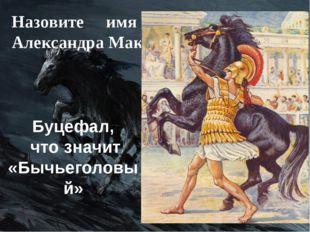 Назовите имя любимого коня Александра Македонского. Буцефал, что значит «Бычь