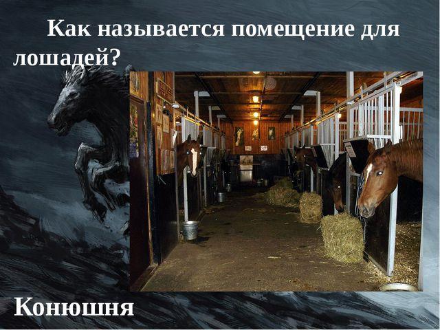 Как называется помещение для лошадей? Конюшня