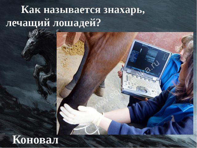 Как называется знахарь, лечащий лошадей? Коновал