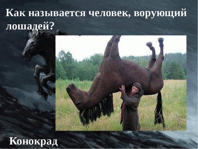 Как называется человек, ворующий лошадей? Конокрад