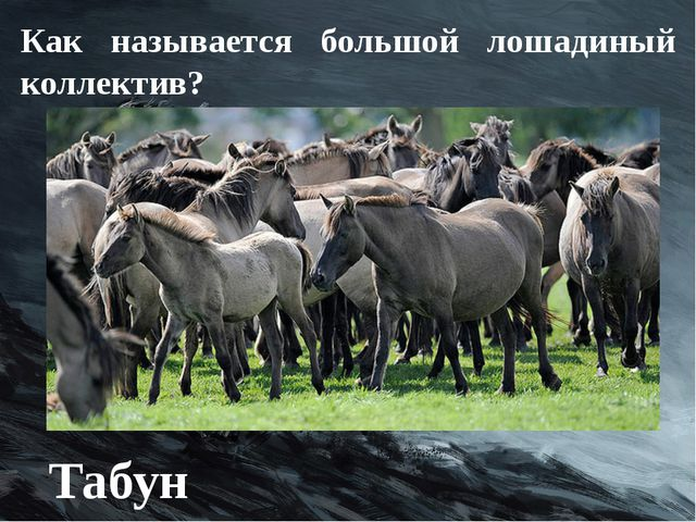 Как называется большой лошадиный коллектив? Табун