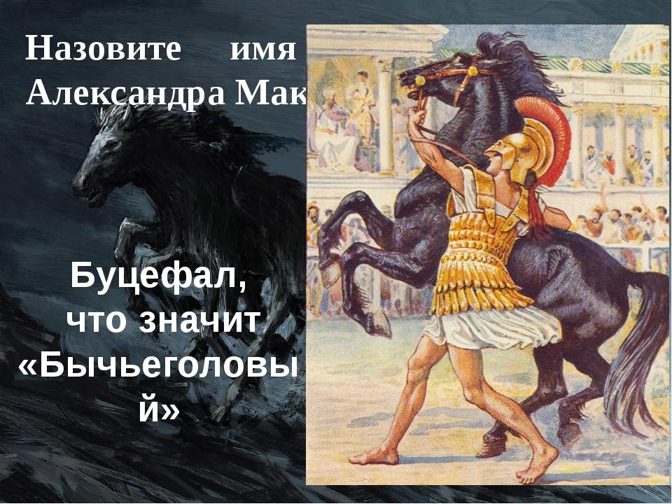 Назовите имя любимого коня Александра Македонского. Буцефал, что значит «Бычь...