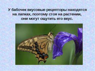 У бабочек вкусовые рецепторы находятся на лапках, поэтому стоя на растении, о