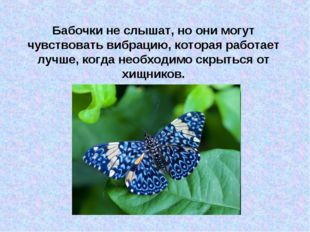 Бабочки не слышат, но они могут чувствовать вибрацию, которая работает лучше,