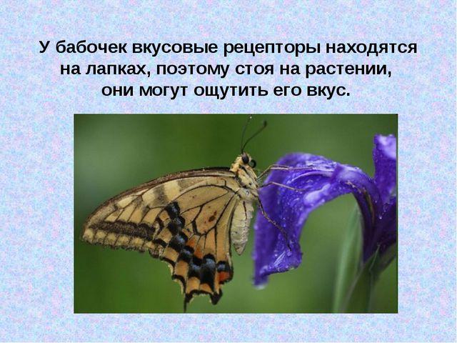 У бабочек вкусовые рецепторы находятся на лапках, поэтому стоя на растении, о...