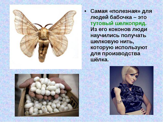 Самая «полезная» для людей бабочка – это тутовый шелкопряд. Из его коконов лю...
