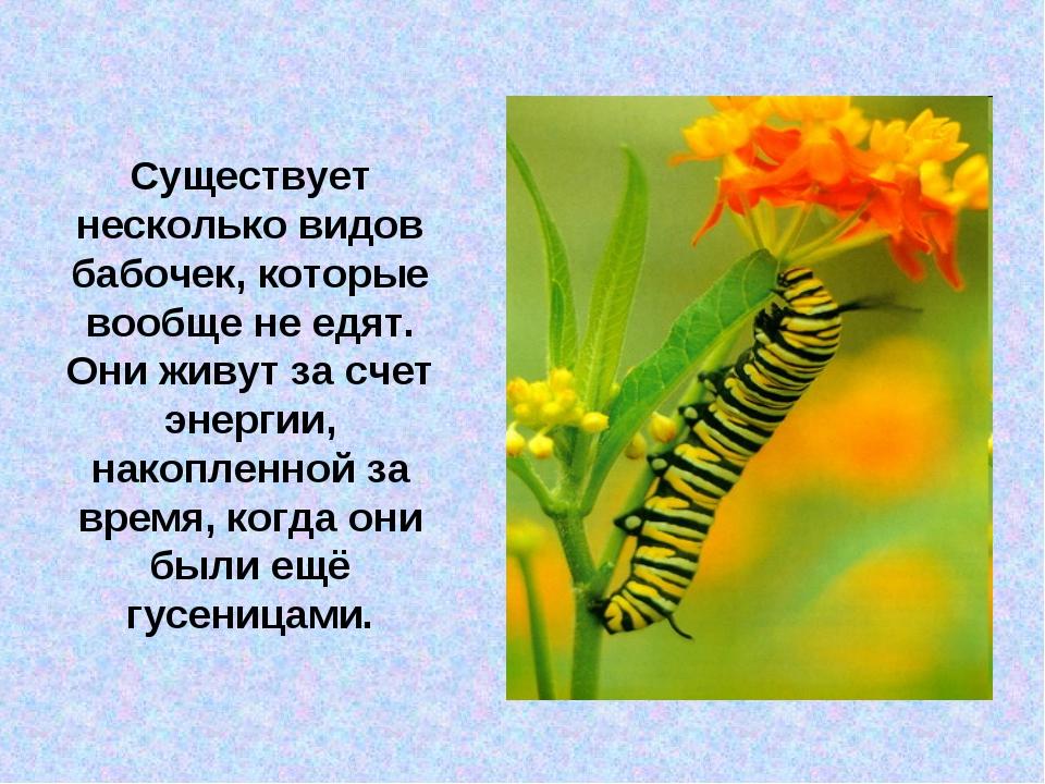 Существует несколько видов бабочек, которые вообще не едят. Они живут за счет...