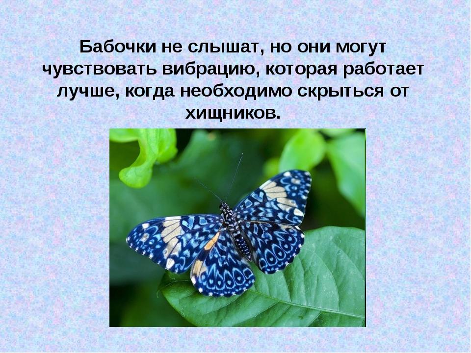 Бабочки не слышат, но они могут чувствовать вибрацию, которая работает лучше,...