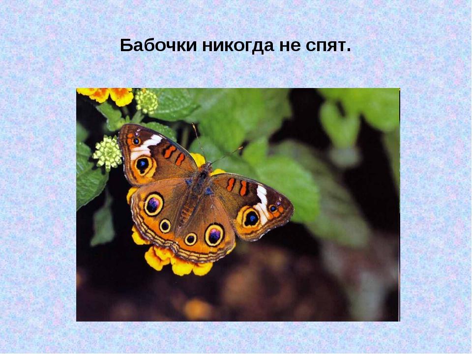 Бабочки никогда не спят.