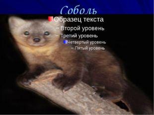 Соболь