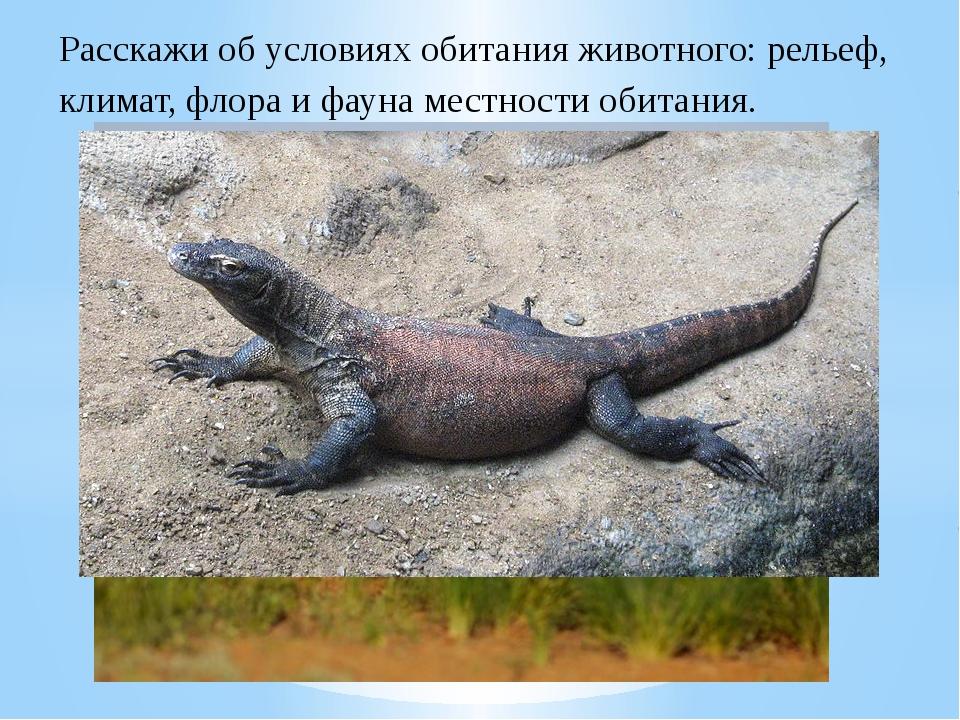 Расскажи об условиях обитания животного: рельеф, климат, флора и фауна местно...