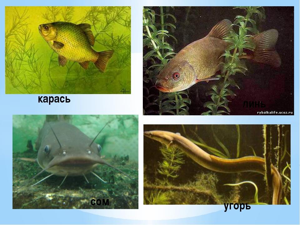 размер картинки рыб которые водятся в водоемах еао венозный катетер длинная