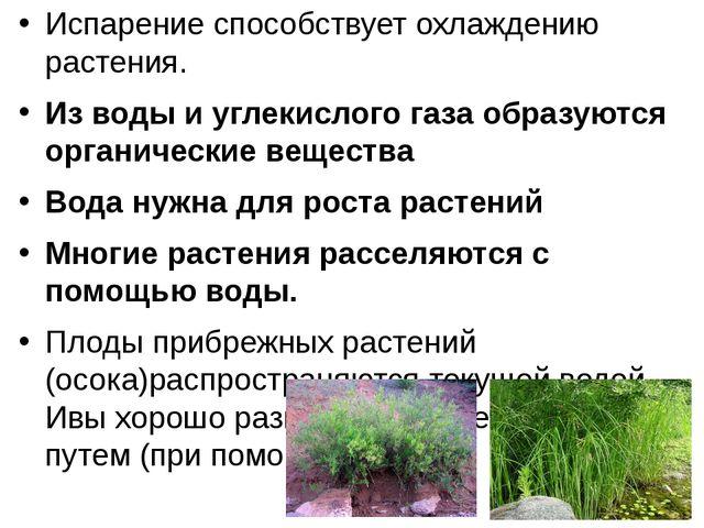 Испарение способствует охлаждению растения. Из воды и углекислого газа образу...