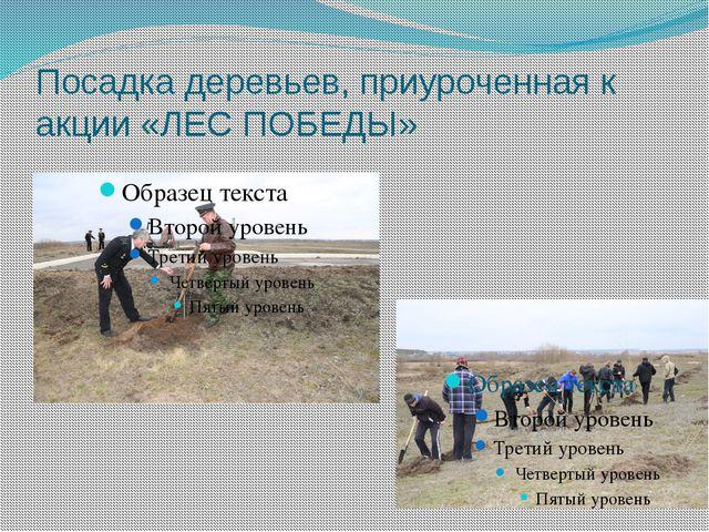 Посадка деревьев, приуроченная к акции «ЛЕС ПОБЕДЫ»