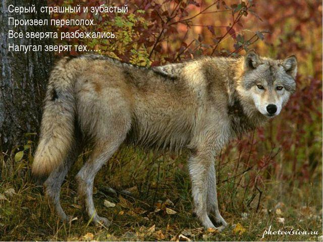 Серый, страшный и зубастый Произвел переполох. Все зверята разбежались. Напуг...