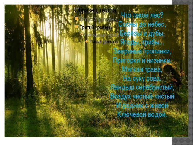 Что такое лес? Сосны до небес, Берёзы и дубы, Ягоды, грибы... Звериные тропи...