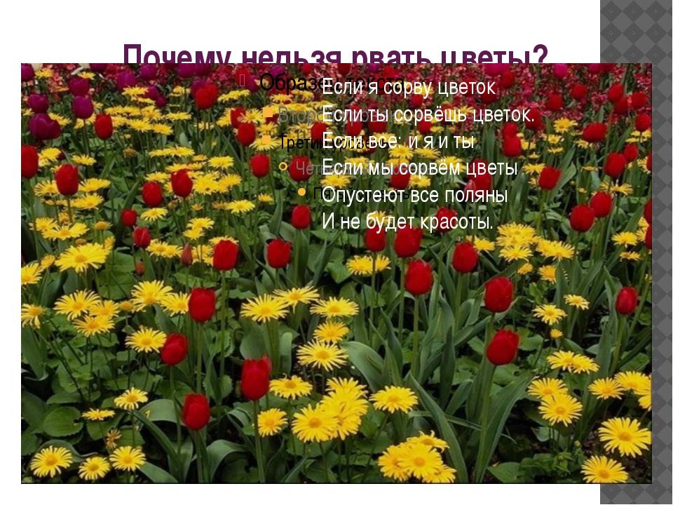 Почему нельзя рвать цветы? Если я сорву цветок Если ты сорвёшь цветок. Если в...