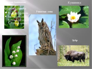 Венерин башмачок Ландыш Кувшинка Ушастая сова Зубр